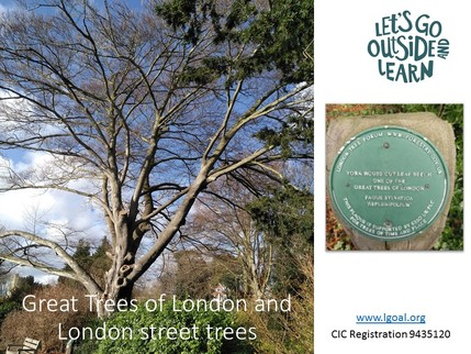 Great Trees of London title