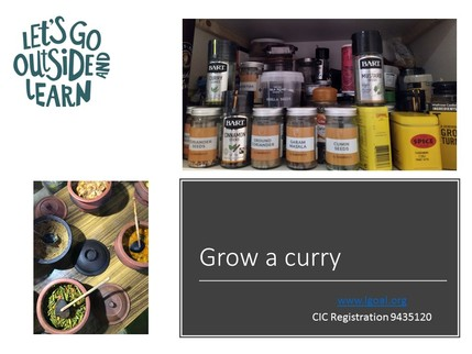 Grow a curry activity