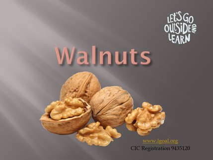 Walnuts front sheet